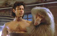 The Fly Picture